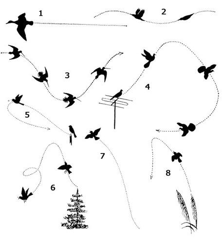 sex praha 10 velký ptáci