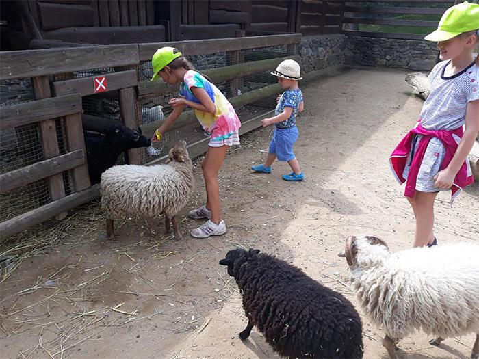 táborová exkurze do zoo